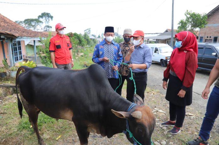 Bupati Lampung Barat memberikan Penyerahan bantuan satu ekor sapi Qurban.